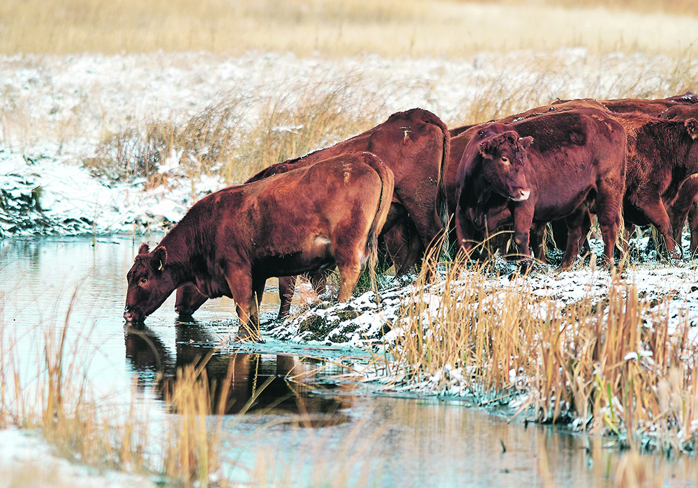 """The removal of the RML will help level the playing field for beef producers and better position our industry to contribute to Canada's economic recovery,"" said Canadian Cattlemen's Asso-ciation president Bob Lowe. 