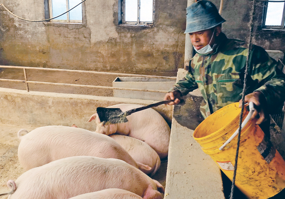 A new variant of the African swine fever disease is spreading in China putting the brakes on the expansion of the hog herd and the consumption of soybean meal and feed grains. | Reuters photo