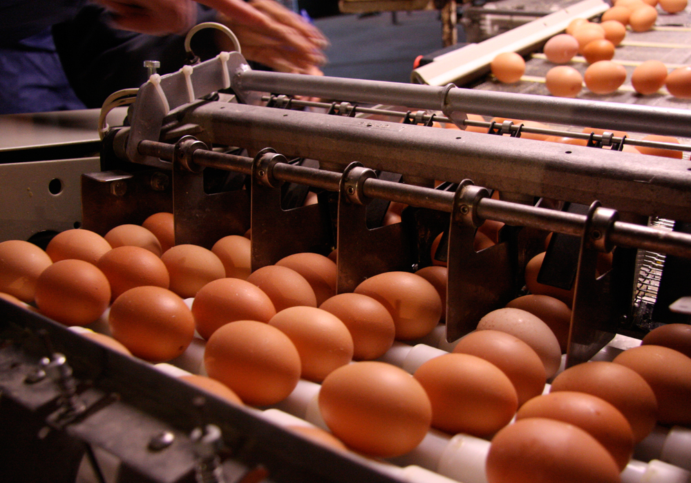 "The majority of the money, about $630 million, ""will help poultry and egg farmers make any kind of investment on the farm that modernizes the operations, boosts competitiveness and meets new market demands,"" according to Bibeau. 