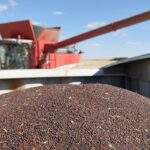 EU biofuel restrictions could benefit canola