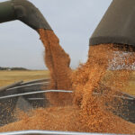 New feedgrain policy may have ramifications