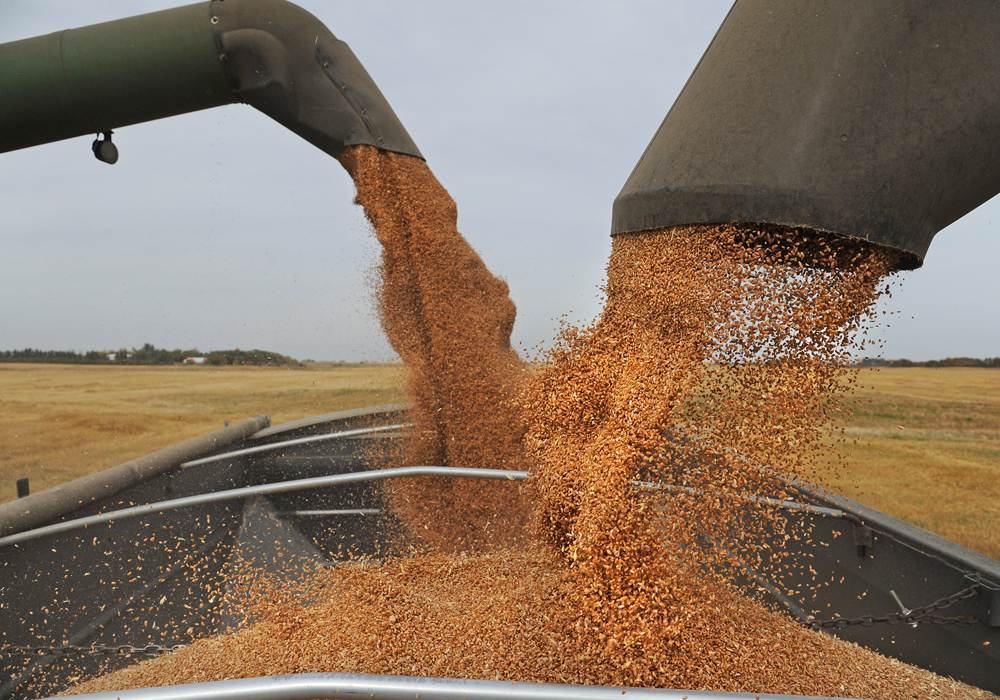 Brennan Turner, CEO of Combyne, believes the new Chinese guidelines will be a blessing for Prairie farmers because it opens the door for the importation of competing feed ingredients like wheat, barley and peas. | File photo