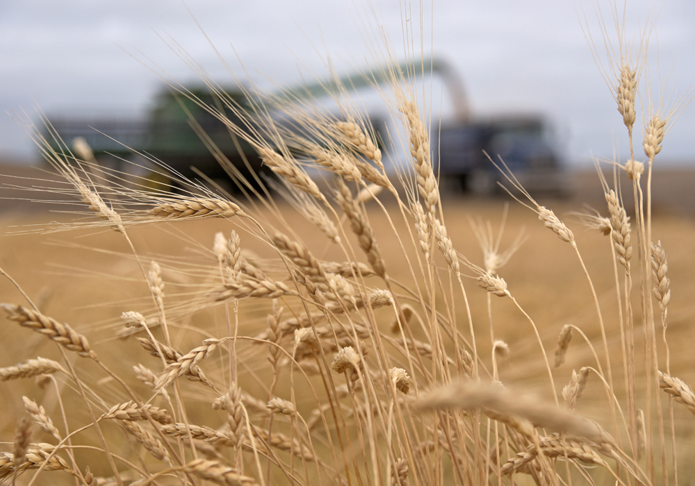 Indonesia is Canada's largest market in Southeast Asia for agri-food products and Canada's single largest wheat customer, according to Global Affairs. | File photo